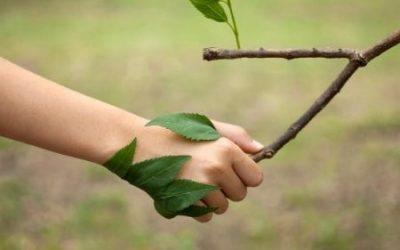 Educação Ambiental – Pós-Graduação