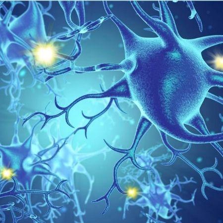 Neurociências